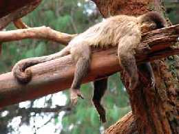 locality zoo monkey